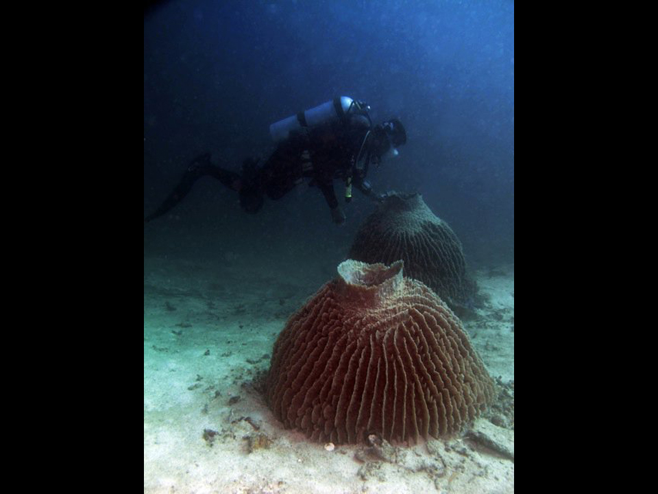 Fun Dive Trips Abroad From Hong Kong, Diving Holiday
